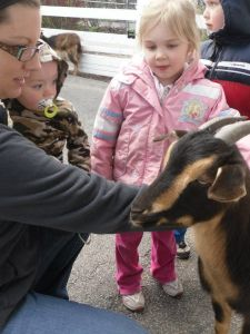 up close and person with a goat