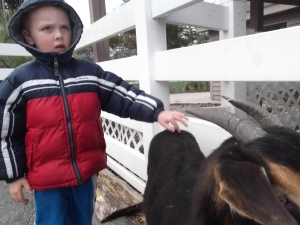 Ethan at the petting zoo