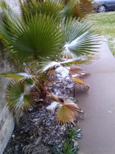 the palm trees by our front door