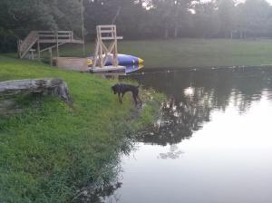 Sadie near the pond