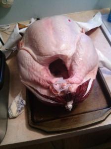 Poor bird!