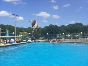 Drake diving